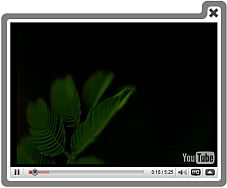 Url Video Embed Player Jquery Record Video Audio